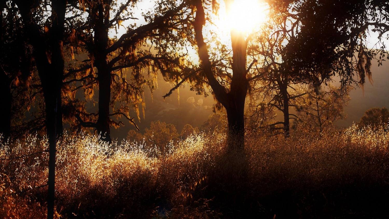 """Das Napa Valley bei San Francisco dient als Vorlage den Schauplatz in der Folge """"...und der grüne Geist"""""""