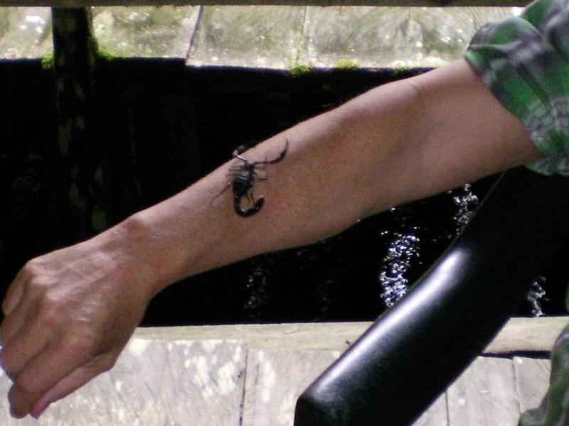 Skorpionmedizin aus dem Dschungel Amazoniens