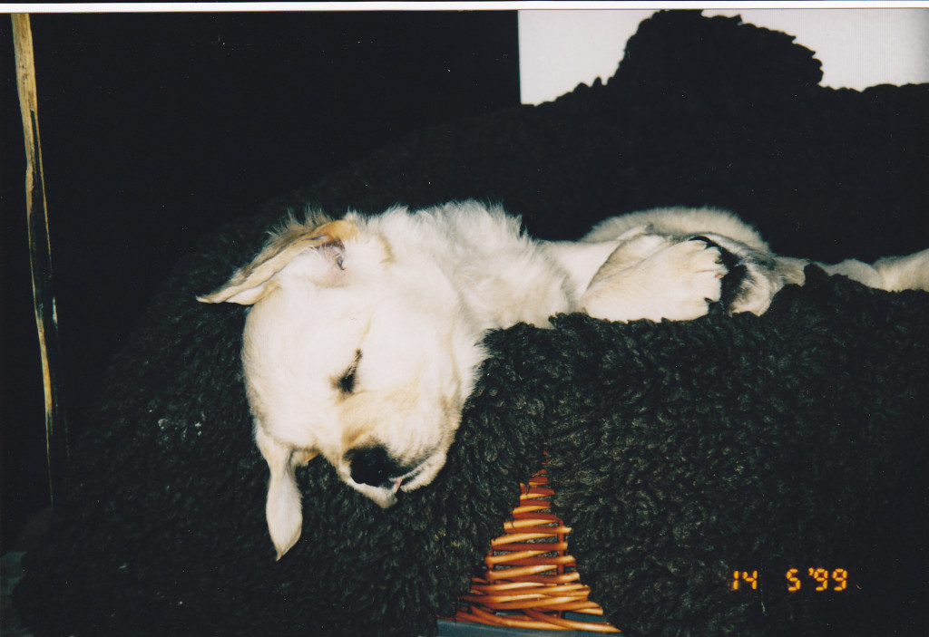 14.05.1999