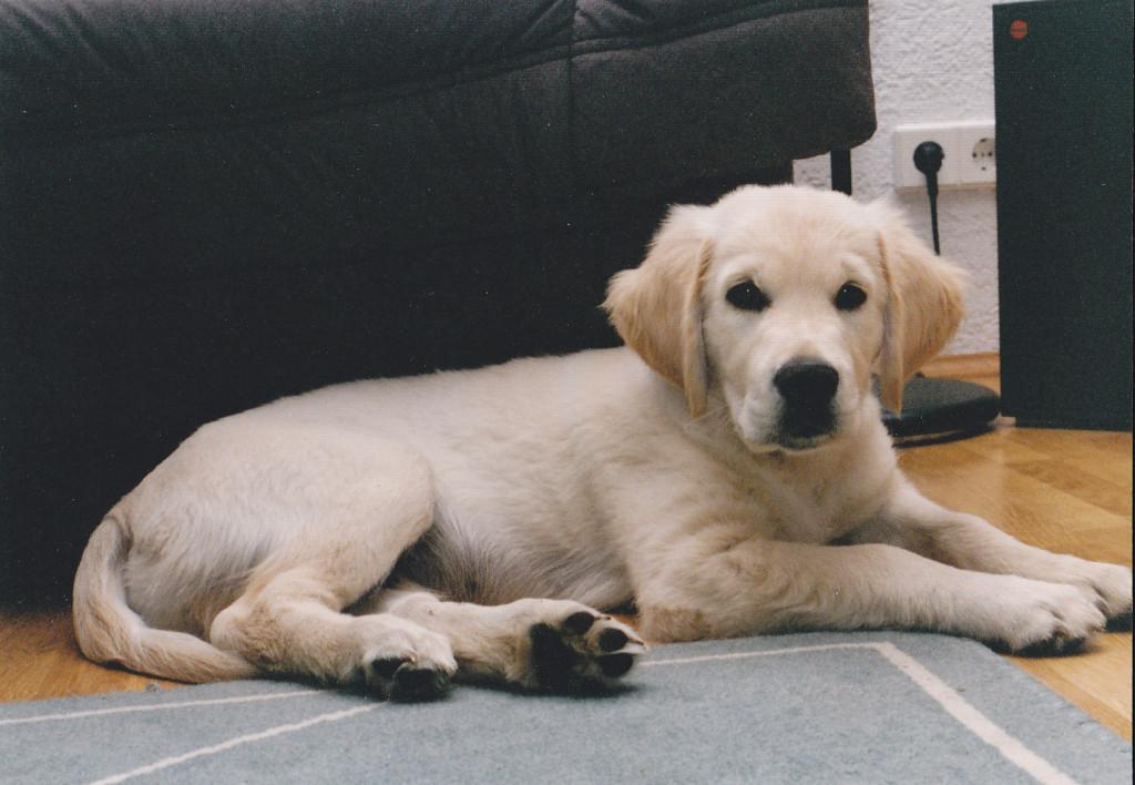 SAM 4 Monate jung