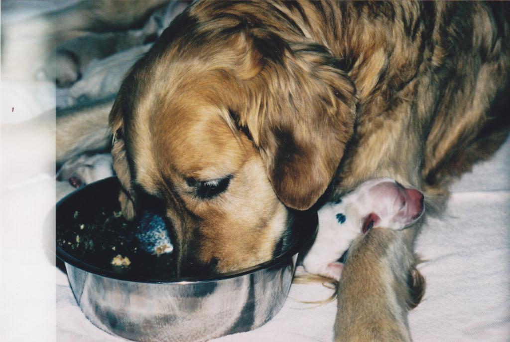 Mama Patty mit Merlin kurz nach der Geburt