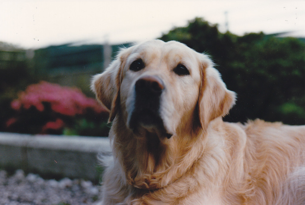SAM Juli 1997