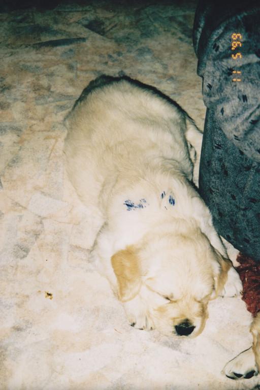 11.05.1999, Merlin 4 Wochen jung