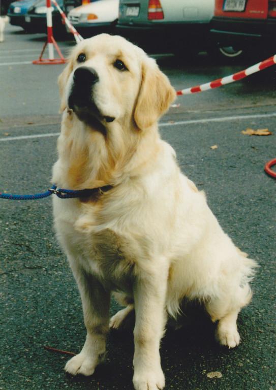 Merlin 05.11.2000 kurz vor der Ausstellung Diemelstadt