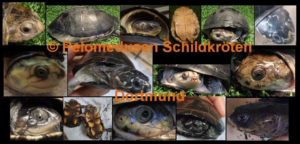 Aus 7 Tieren werden 32 Tiere – aus 3 Arten werden 10 Arten