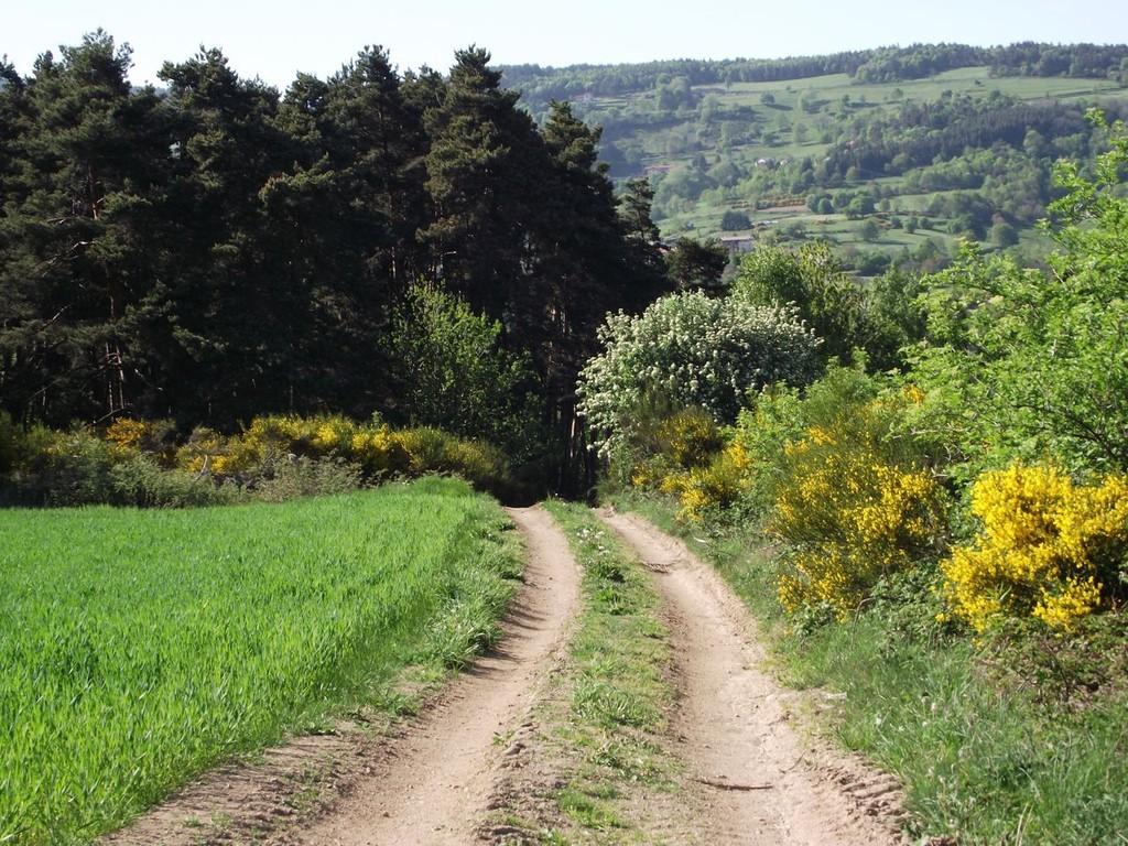 Chemin au printemps