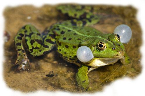 Amphibien, Fische & Reptilien