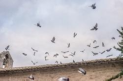 aufgeschreckte Vögel