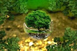 Glasblase um den Baum ist defekt
