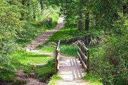Waldweg mit kleiner Brücke im Vordergrund