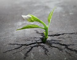 Pflanze durchbricht den Asphalt