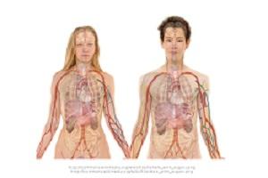 zwei Körper in der Schemazeichnung Stoffwechsel