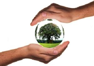 Glaskugel mit Baum drin zwischen den Händen bewahrt