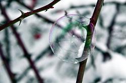 Seifenblase hängt an Dornenstrauch fest