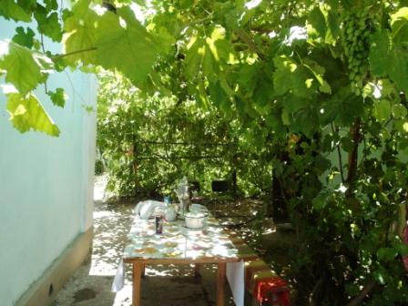Под гостеприимным виноградником трапезничали
