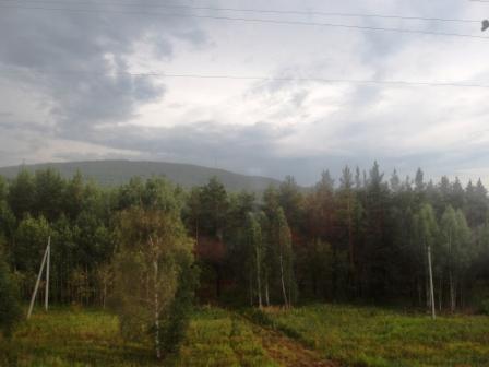 Сосновые леса на Урале
