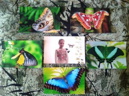 Оксана Ефремова. Выставка тропических бабочек