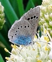 природа, насекомые, животные, стихи о природе, Оксана Ефремова