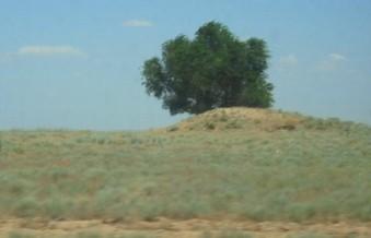 Одиночное дерево