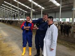 Beratung in der Rinderzucht beim Deutsch-Chinesischen Projekt.