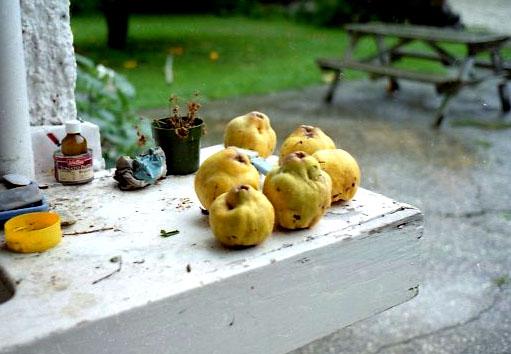 fast alles Essbare wuchs hier im eigenen Garten