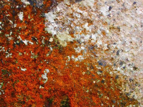 die Farben in einem von der Natur komponierten Verbund