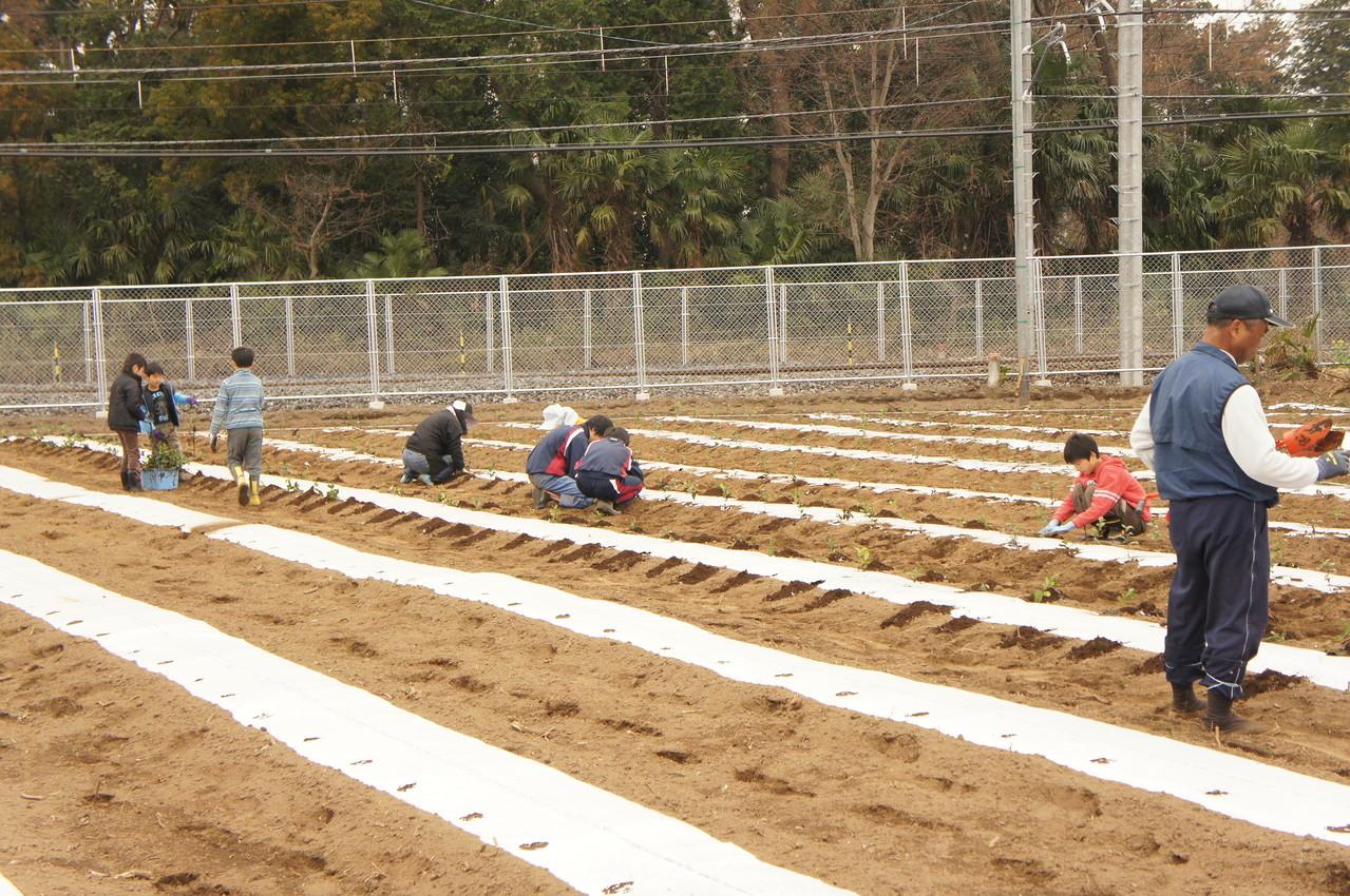 穴を掘る人・苗を配る人・植える人