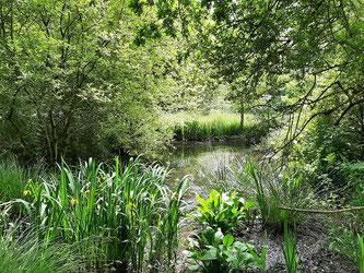 Initiation à l'écologie des milieux naturels et cultivés samedi 13 Février (reportée au 13 Mars)