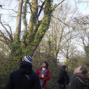 Description d'une haie ancienne lors de la première initiation sur les arbres que j'ai animée sur la ferme les demains dans la terre en 2015