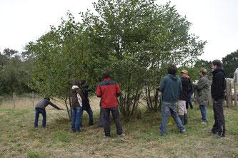 Atelier conduite et taille des arbres champêtres mardi 29 Décembre (reporté)