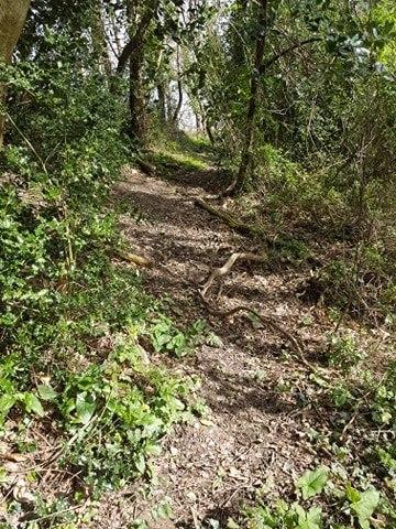 Initiation à l'écologie des milieux naturels et cultivés samedi 13 Mars (reporté)