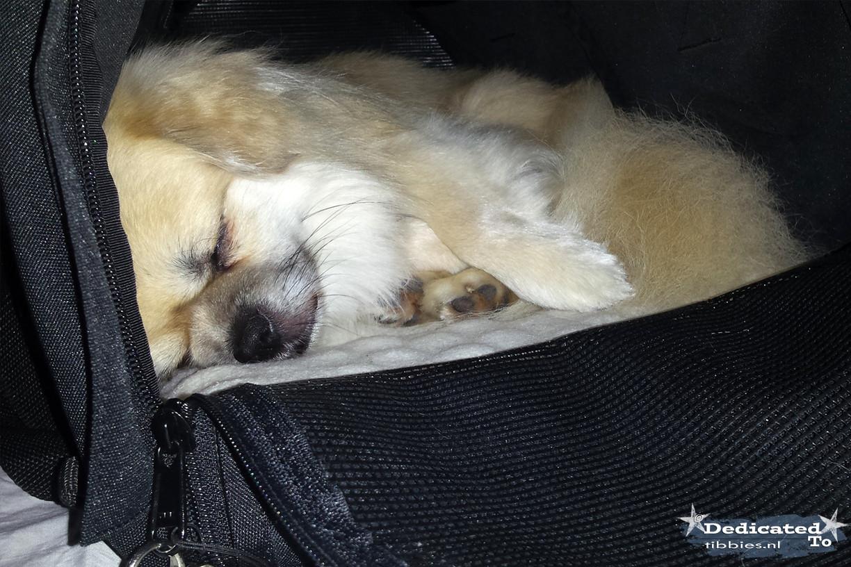 Bristow relaxen in zijn favoriete tas