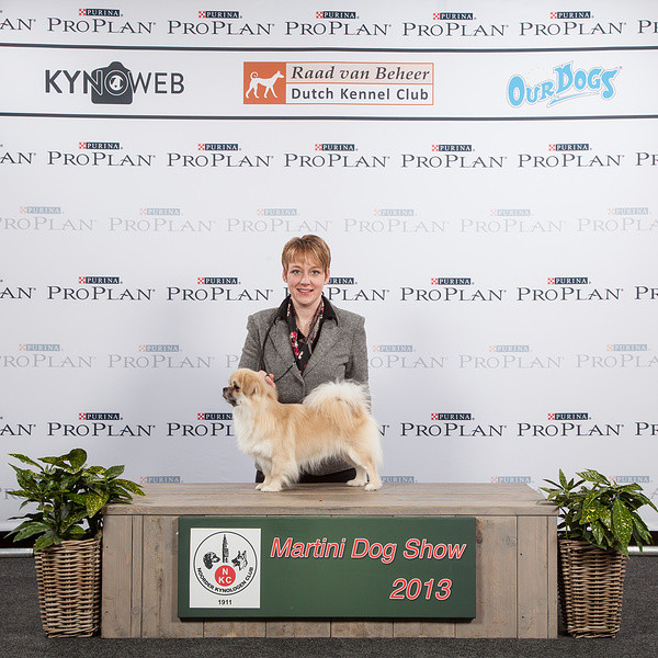 "Best of Breed en Nederlands & Internationaal Kampioen ""Bristow"""