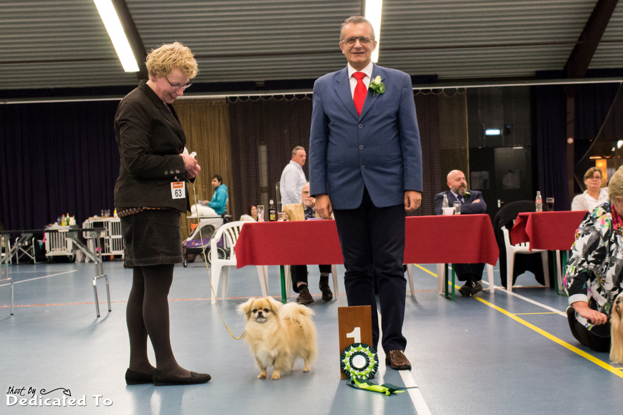 Best in Show Veteraan Blondy