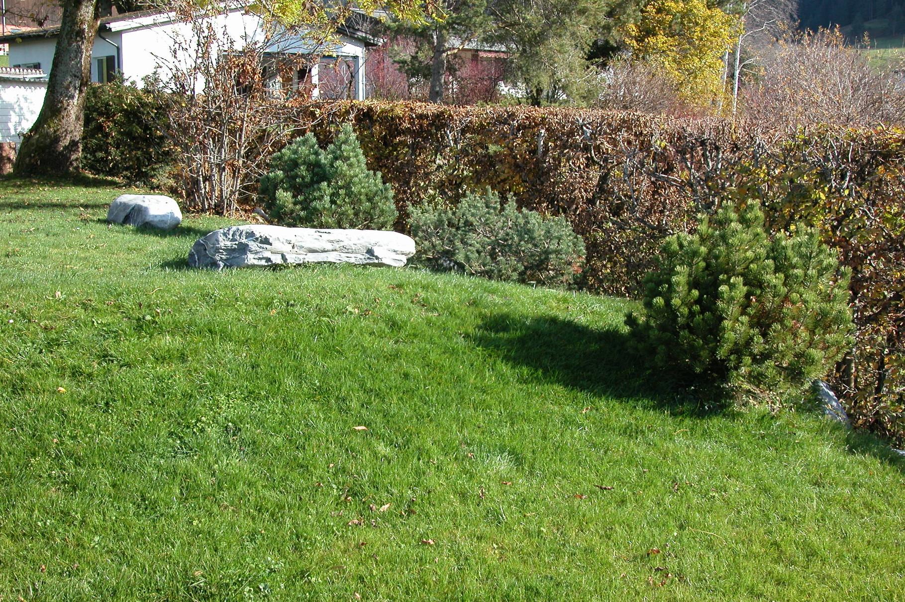 Rasen mit Findlingen und Zwergföhren
