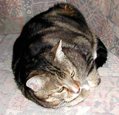 Olli, † 31.05.2005 (13 Jahre)