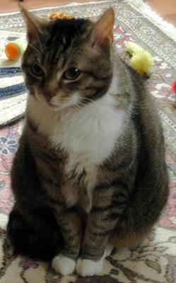 Flocke , † 27.11.2015 (19 Jahre)