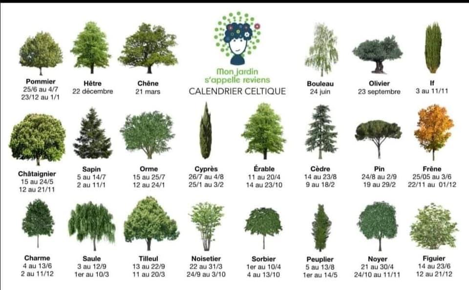 Le calendrier des arbres celtiques