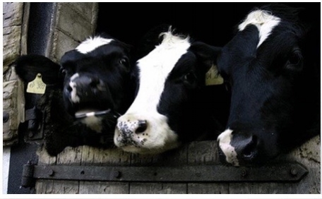 Frische Milch vom Bauernhof
