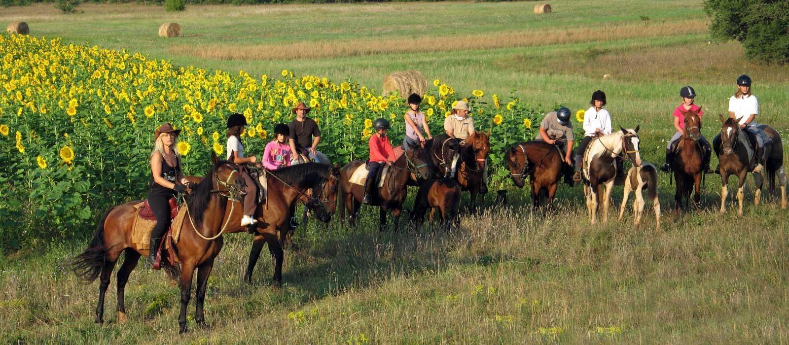 nombreuses fermes équestres autour de Pula...