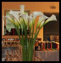 Mexikanische Callas-Blumen als Deko