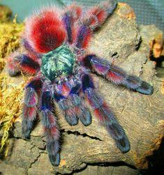 Spinnen und Insekten Ausstellung