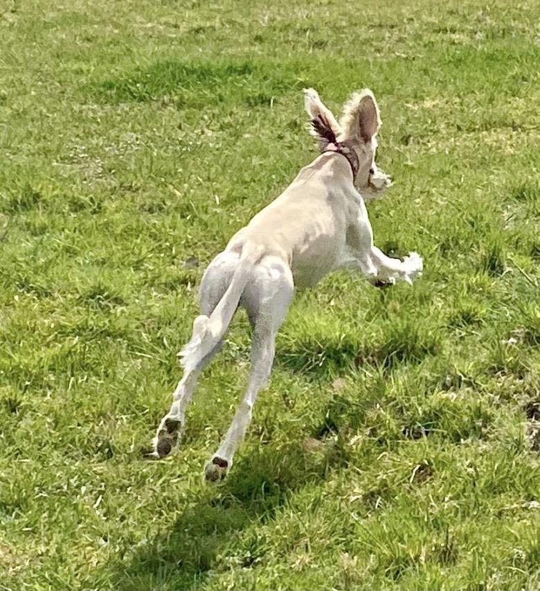 Der Osterhase hat es dieses Jahr sehr eilig.