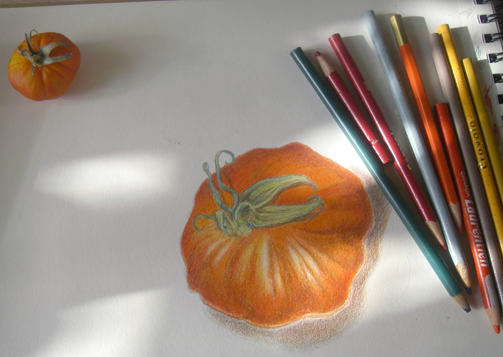 tomato - color pencil on paper