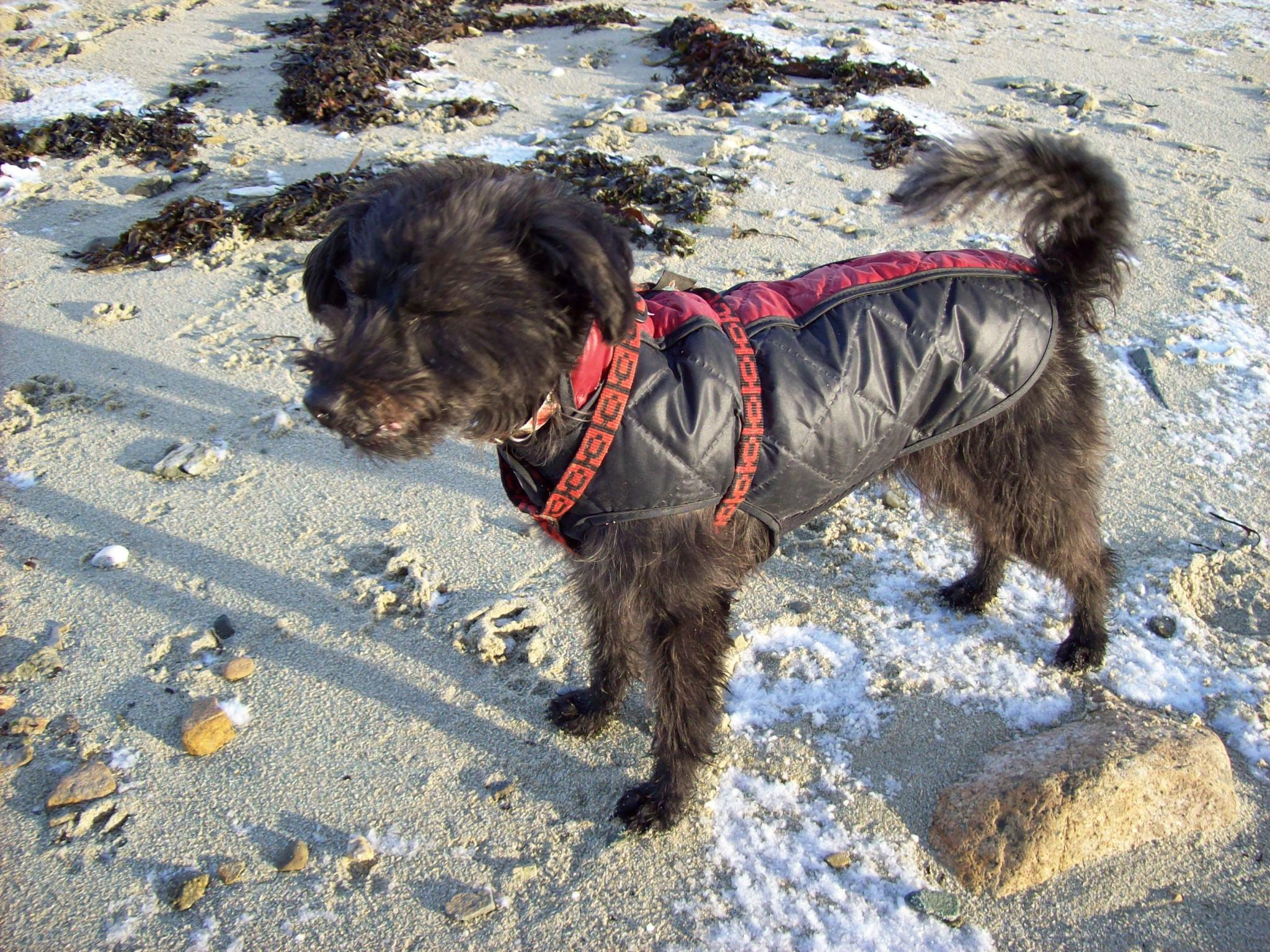In Wind und Wetter am Strand ...