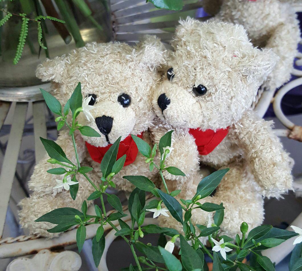 Kleine Teddybären