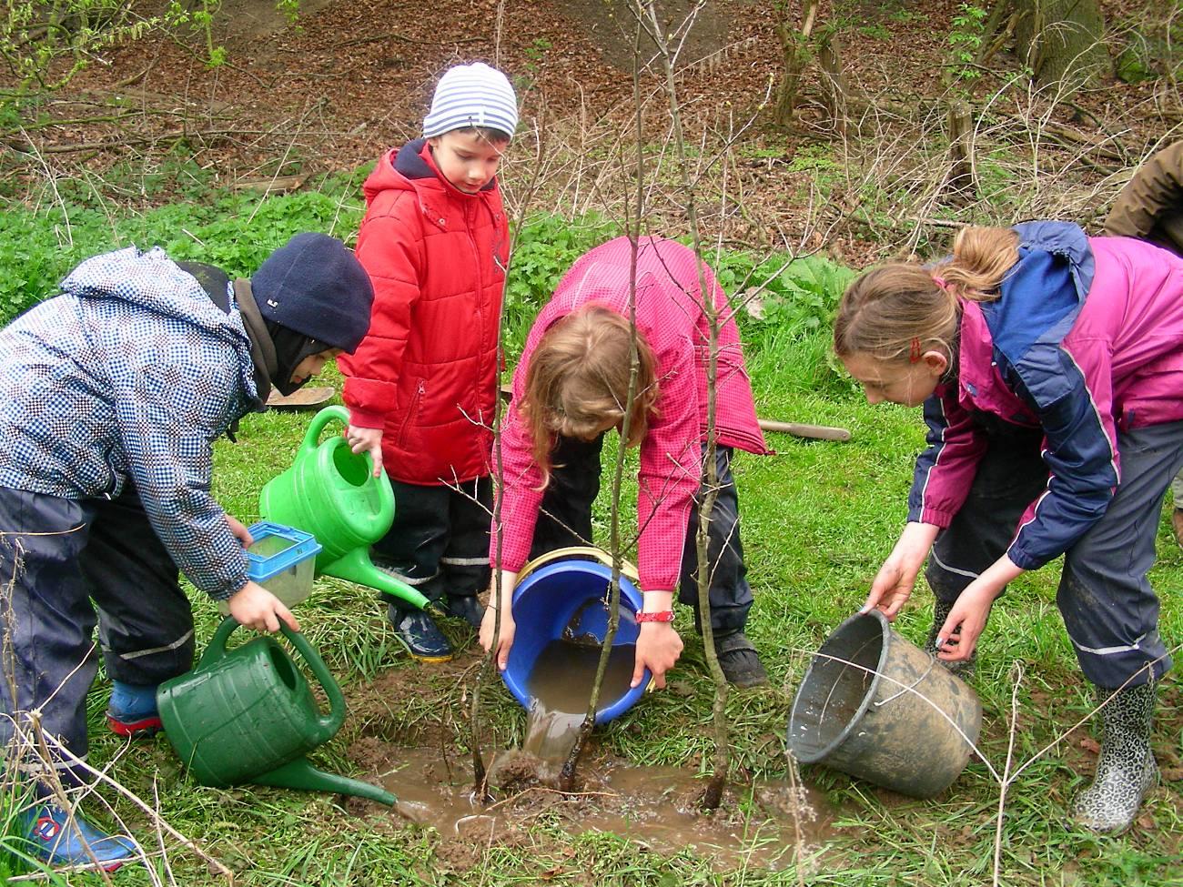 Wir pflanzen drei Traubeneichen