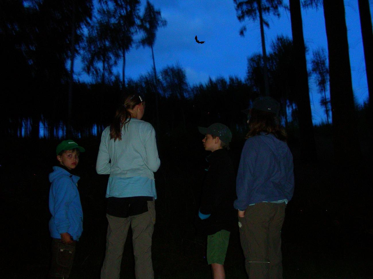 Fledermäuse im Bullerbachtal 2014