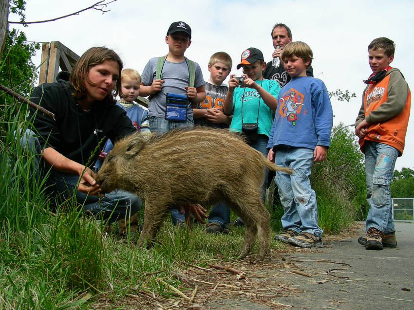 Wir besuchen die Wildtier- und Artenschutzstation Sachsenhagen 2007