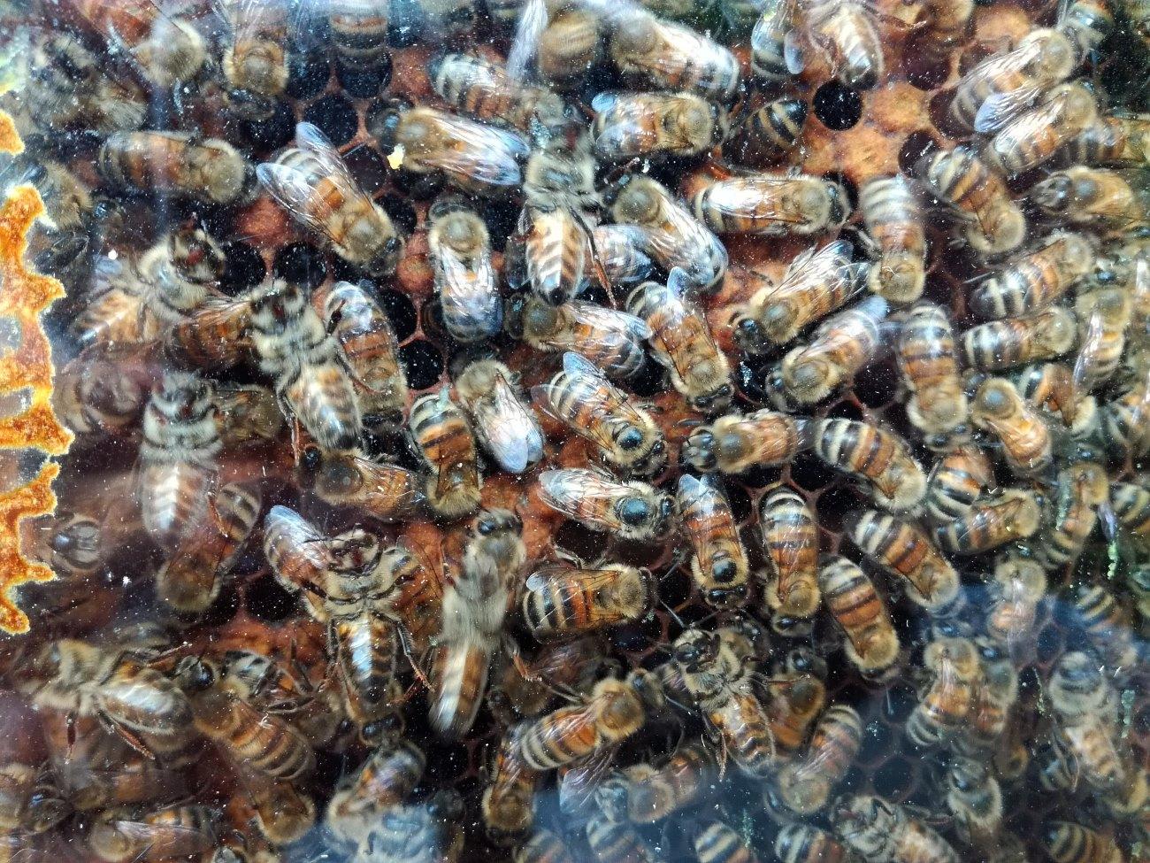 Wir besuchen Mattis Bienen
